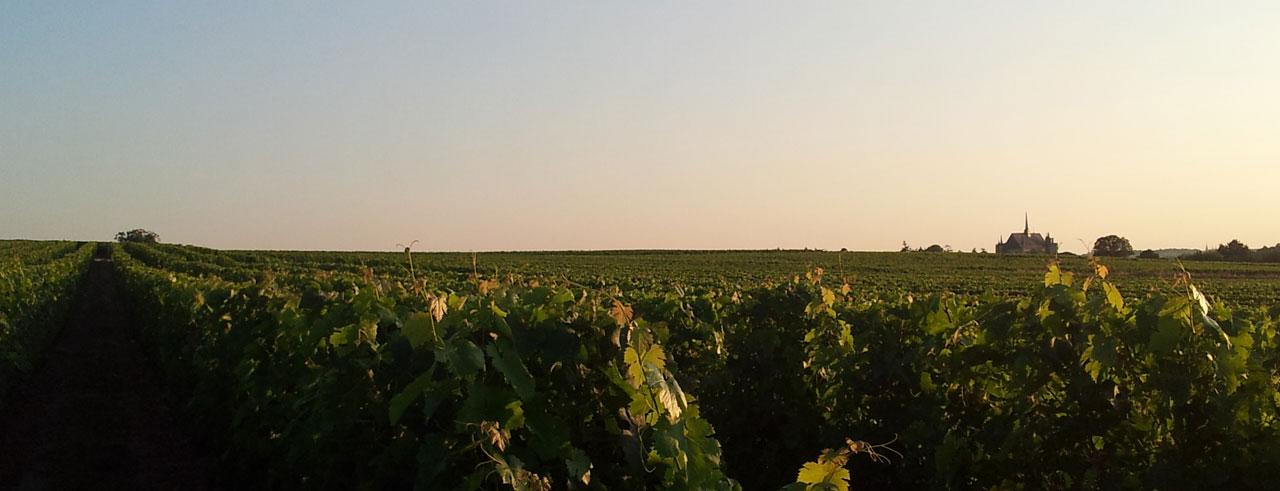 La Maison Des Vins Anjou Saumur Achat De Produit Vins De